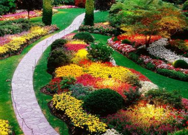 How to Choose Plants for Your Front Lawn and Backyard