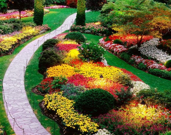 Plants for Lawns and Backyards