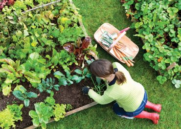 10 Rules of the Successful Modern Gardener