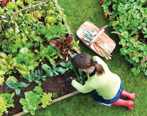 The Rules of Gardener