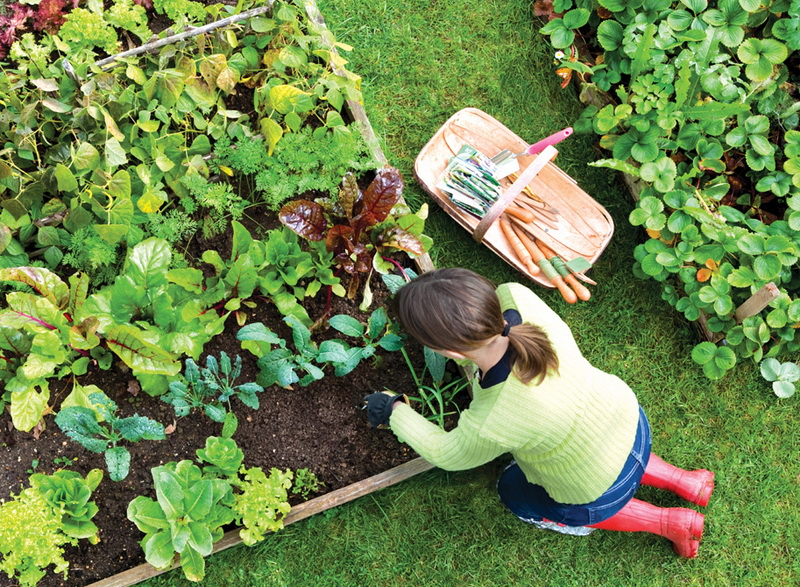The Rules of Gardener