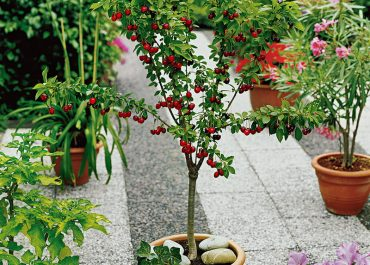 Tips How to Keep Your Garden Trees Healthy and Problem-Free
