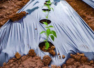 Top 5 Advantages and 5 Disadvantages of Applying Landscape Fabrics
