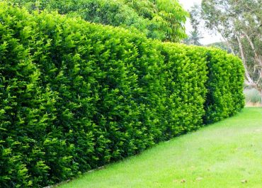 Top Shrubs and Bushes to Protect Your Property