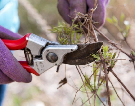 How to Prune Plants in Winter