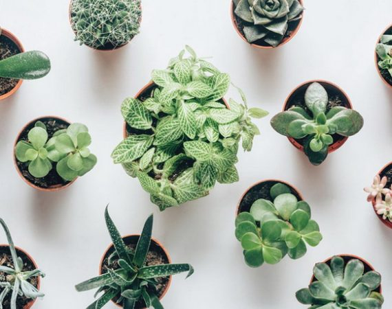 Indoor Plants That Require Seldom Watering