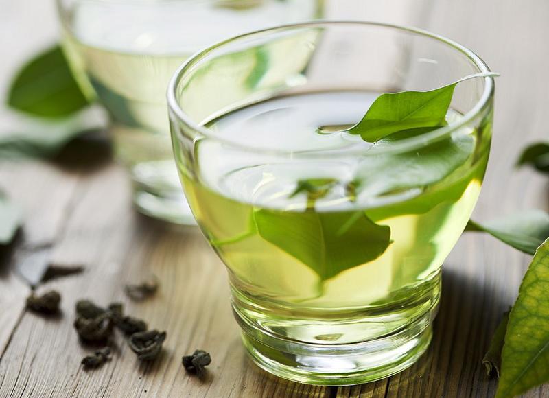 Growing Tea Plants