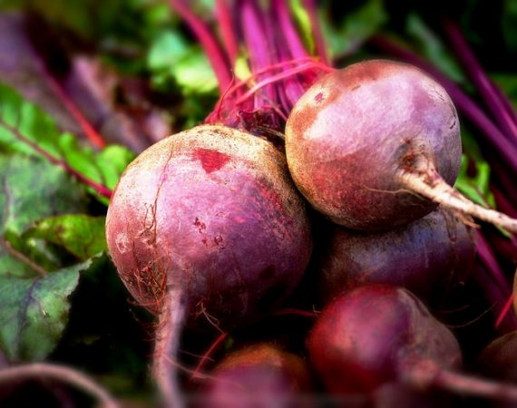 grow beetroots in your garden